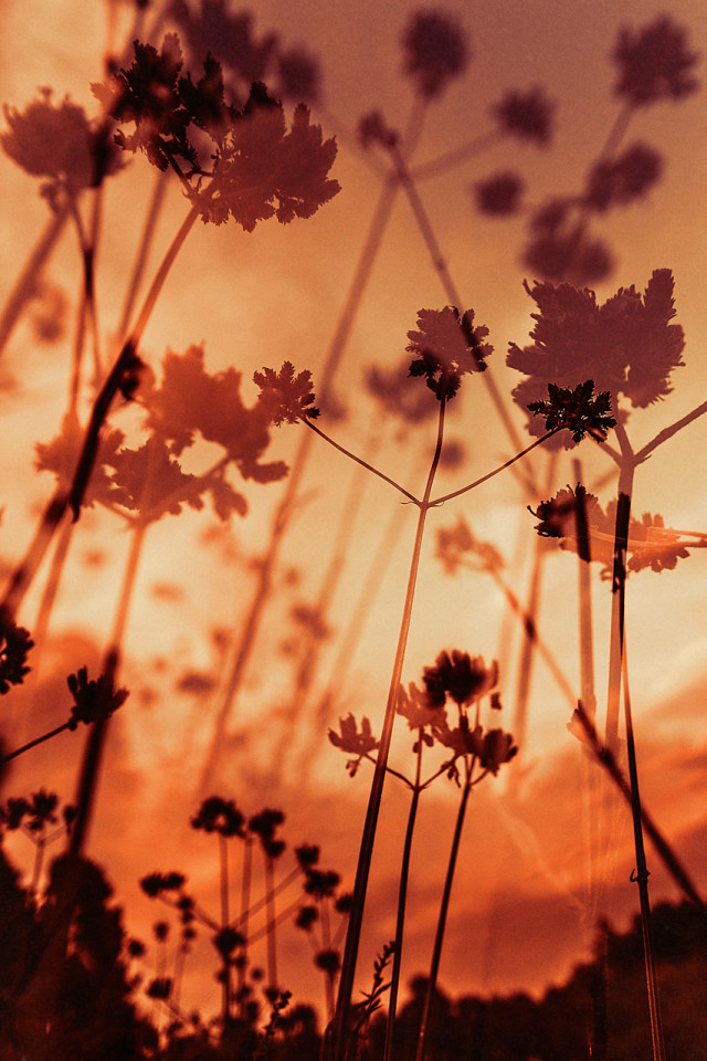 Flowers Double X